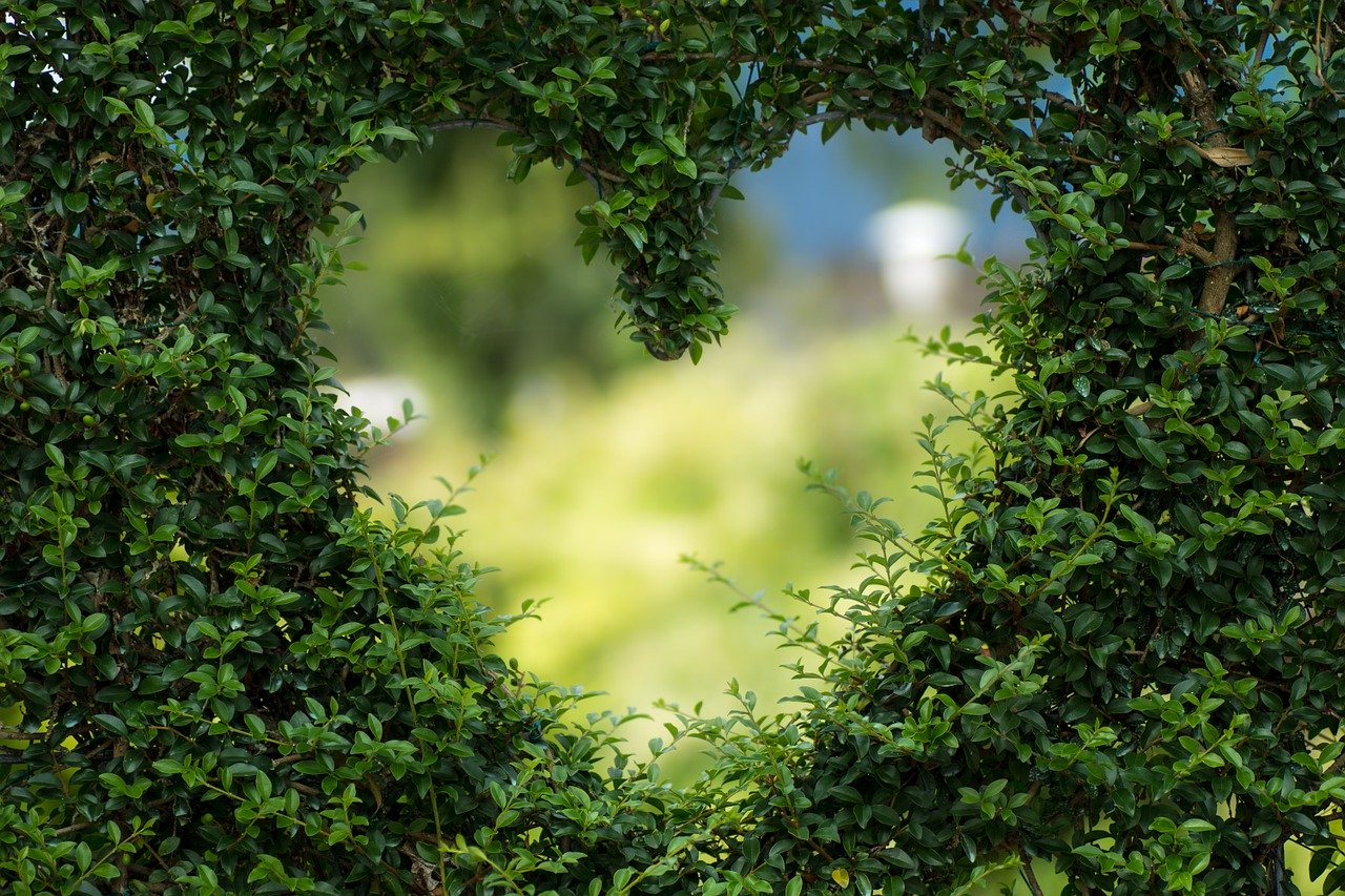 5  ideas for a sustainable Valentine's day